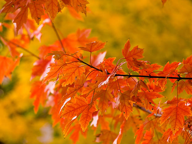 Colorful Autumn leaves stock photo