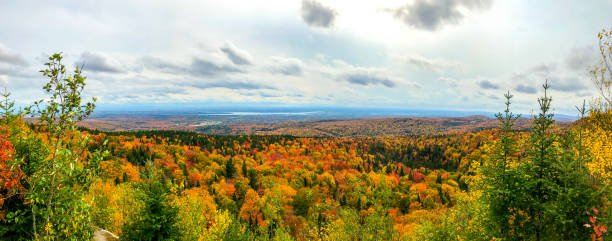 Colorful autumn lush foliage during day
