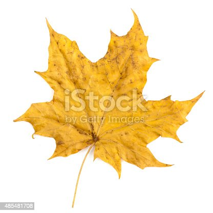 istock colorful autumn maple leaf isolated on white background 485481708