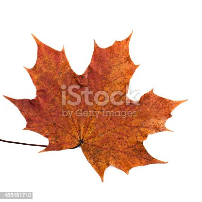 istock colorful autumn maple leaf isolated on white background 485481710
