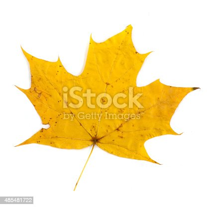 istock colorful autumn maple leaf isolated on white background 485481722