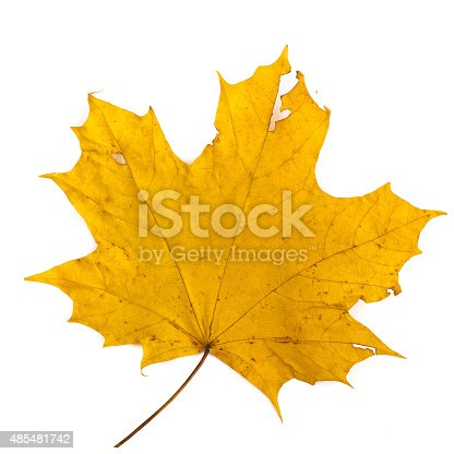istock colorful autumn maple leaf isolated on white background 485481742