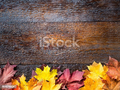 istock Colorful autumn maple leaves on rustic brown wooden background with copy space. 858299042
