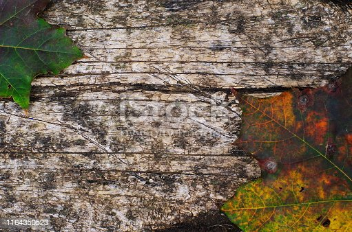 istock colorful autumn maple leaves on rustic wooden table . Multicolor maple leaves background 1164350523