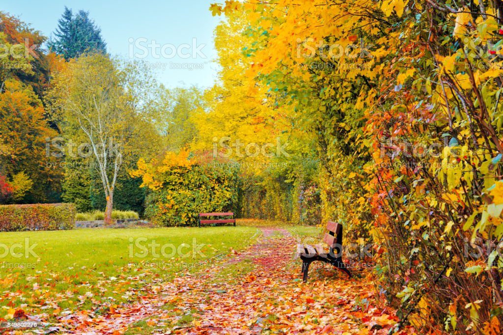 Colorful Autumn Park In Sunny Day And Wood Bench Stock Photo