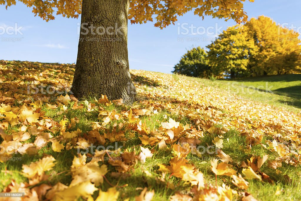 Colorful autumn park royalty-free stock photo