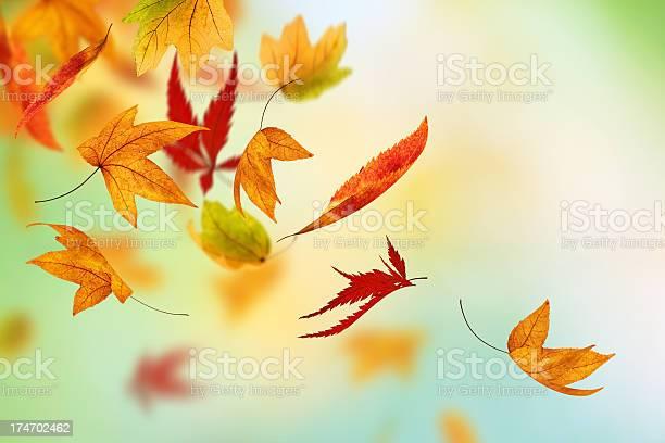 Photo of Colorful Autumn