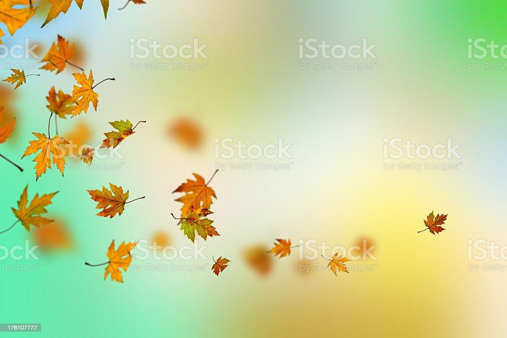Colorful autumn stock photo