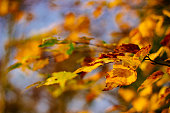 Autumn leaves on the sky background