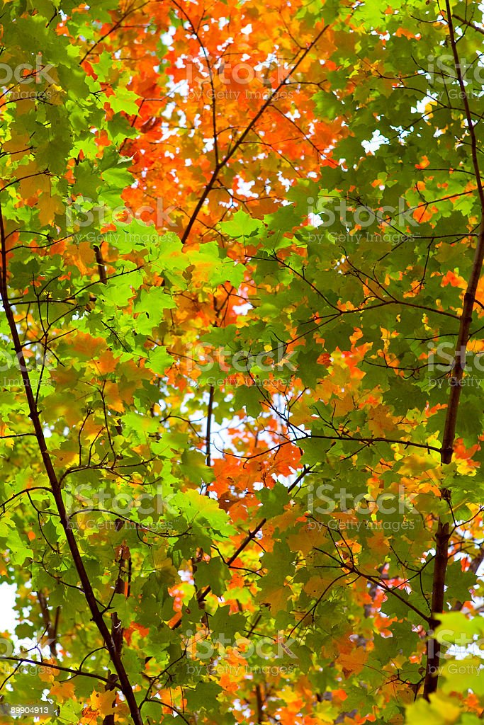 Colorato autunno foto stock royalty-free