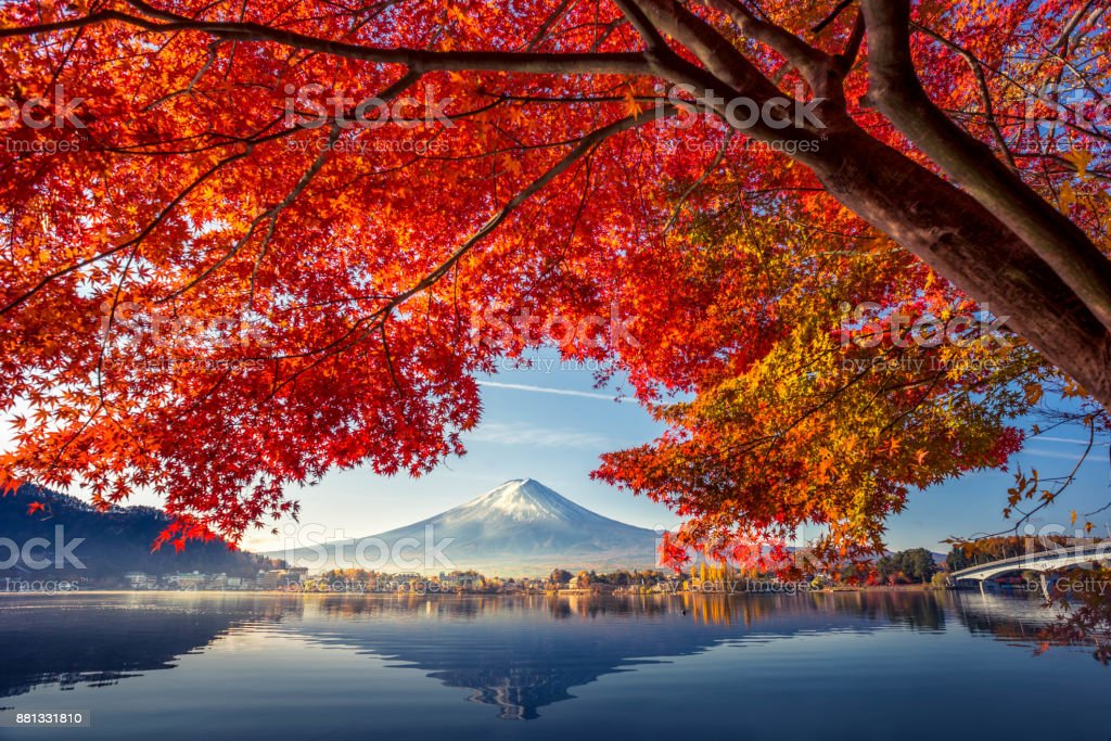 Colorful Autumn Season and Mountain Fuji with morning fog and red leaves at lake Kawaguchiko is one of the best places in Japan stock photo