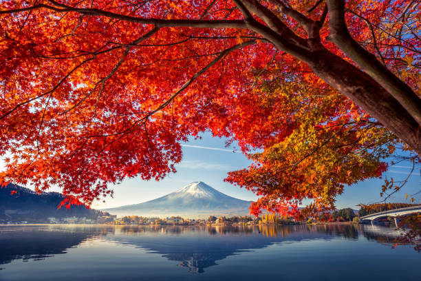 colorful autumn season and mountain fuji with morning fog and red leaves at lake kawaguchiko is one of the best places in japan - клён стоковые фото и изображения