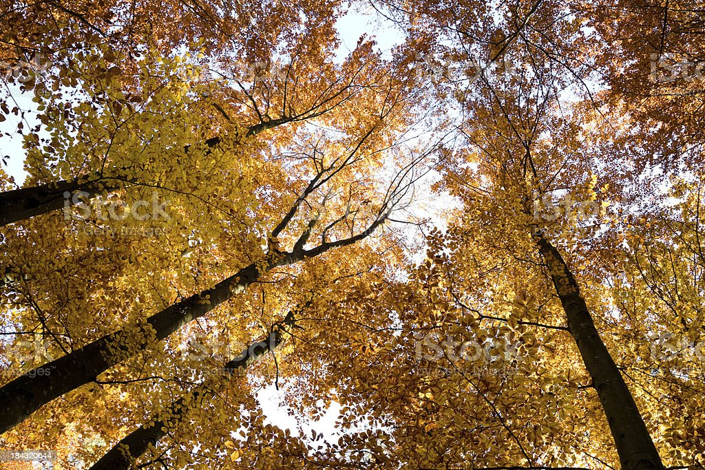 colorful autumn tree top royalty-free stock photo