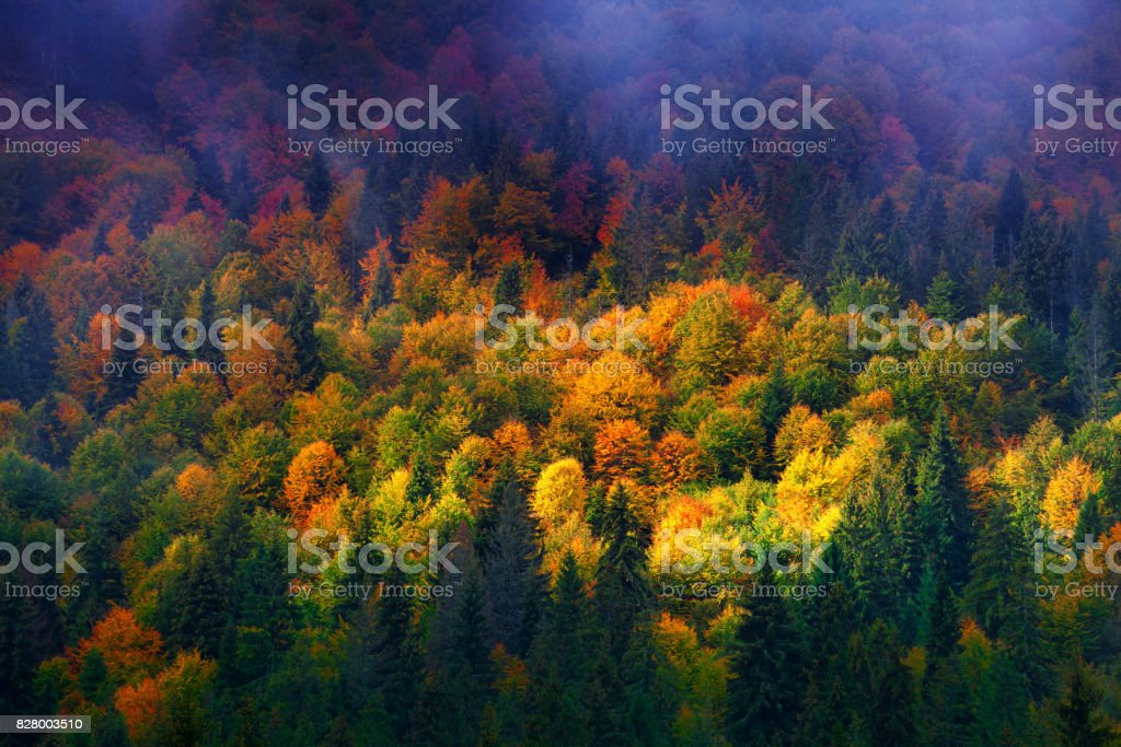 colorful autumn trees in mountain forest stock photo
