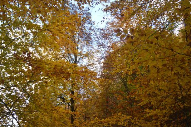 färgglad höst träd i skogen - bernkastel kues höst bildbanksfoton och bilder