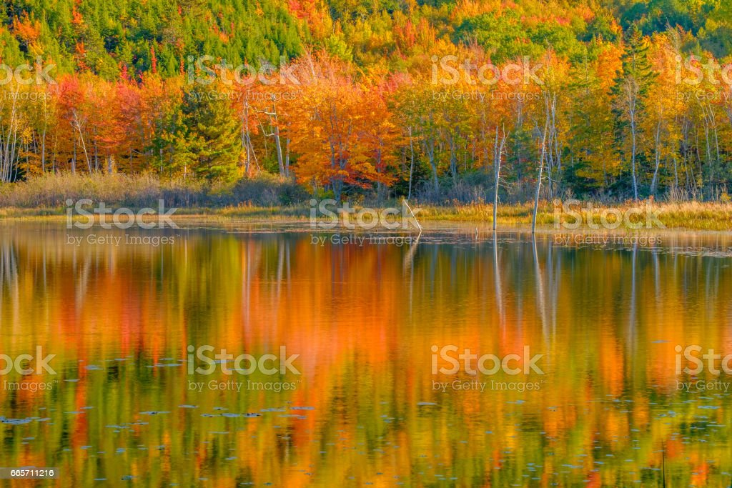 Colorful Autumn trees line a small beaver pond stock photo