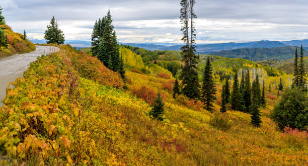 A colorful autumn view of a mountain valley at side of a rugged and winding high mountain road, Buffalo Pass Road in Routt National Forest, Steamboat Springs, Colorado, USA. Autumn Mountain steamboat springs stock pictures, royalty-free photos & images