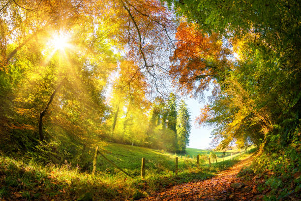 Colorful autumn wonderland stock photo