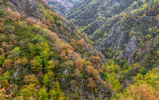 Colorful autumnal in the canyon of the Balouta River