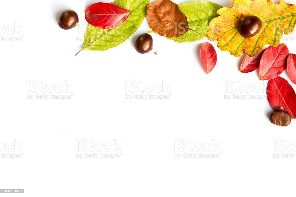 Colorful autumnal leaves and nuts on white stock photo