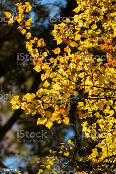 Kolorowe Jesienne Liście W Słońcu - zdjęcia stockowe i więcej obrazów Bez ludzi