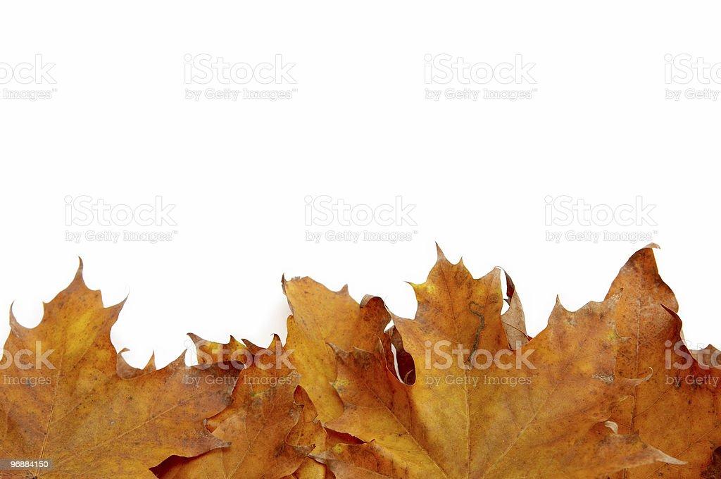 Farbenprächtige Herbstblätter Lizenzfreies stock-foto