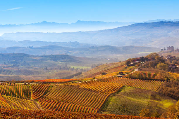 Colorful autumnal vineyards and foggy hills in Italy. stock photo