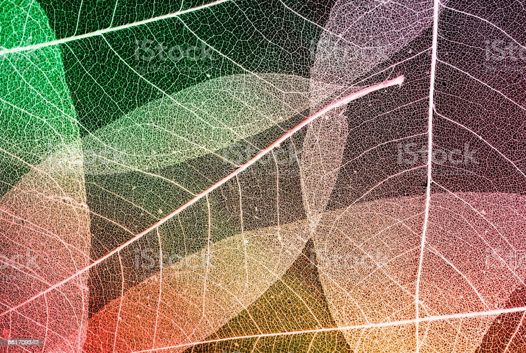 colorful background made of beautiful openwork transparent weightless skeletons of leaves stock photo