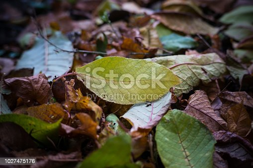 istock Colorful backround image of fallen autumn leaves perfect for seasonal use. 1027475176