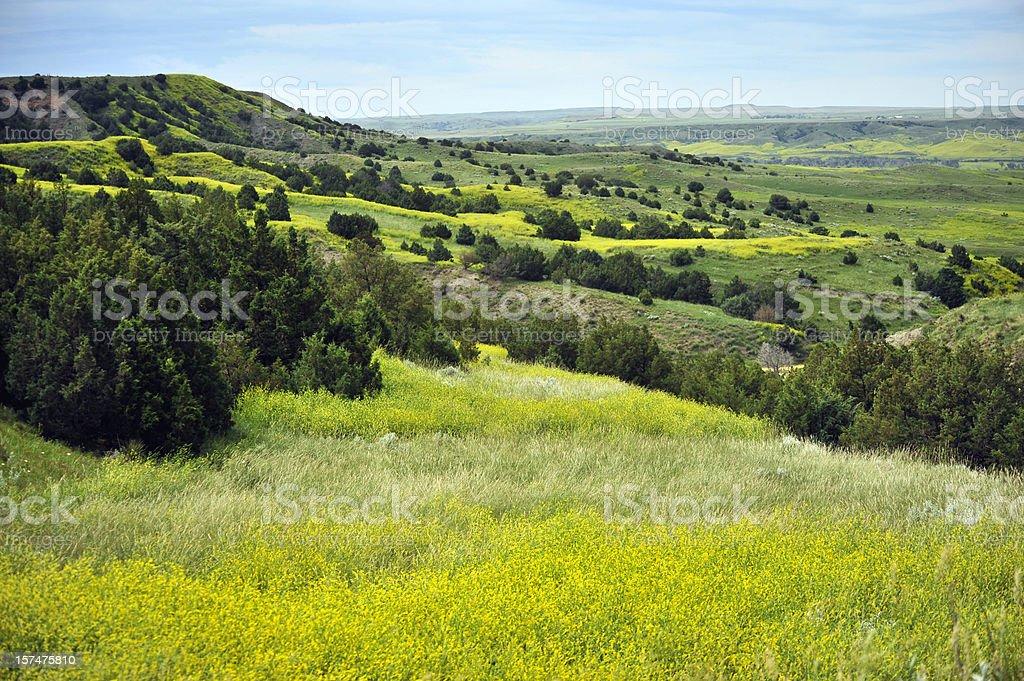 Colorful badlands landscape in full spring bloom stock photo