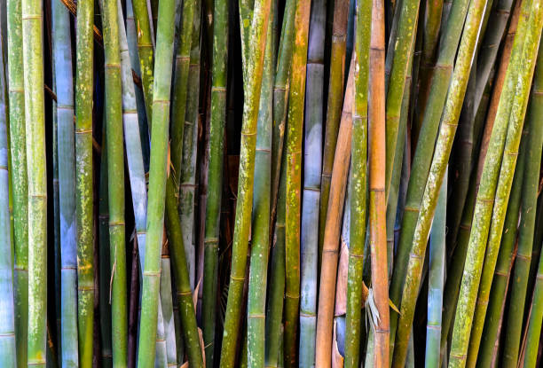 Colorful Bamboo stock photo
