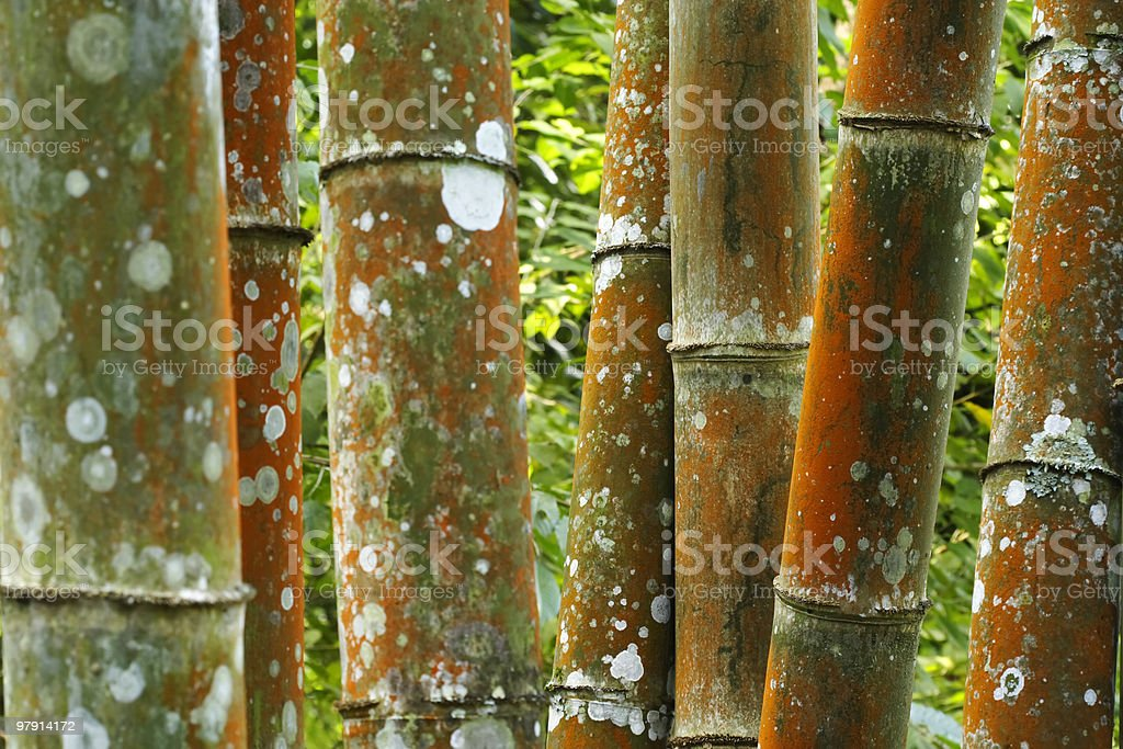 Colorful bamboo royalty-free stock photo