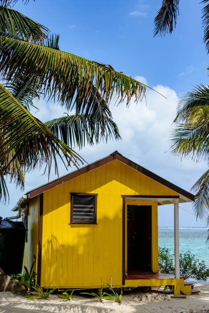 Colorful beach side cabin with palm tree stock photo