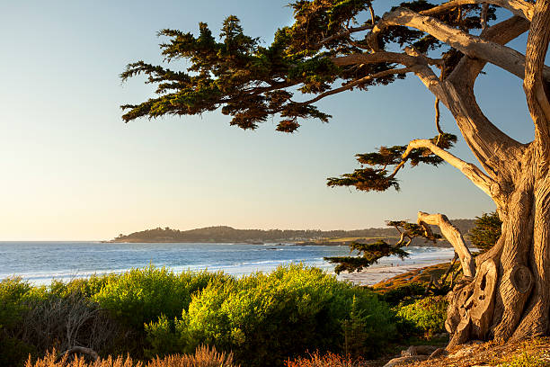 colorful beachfront in carmel-by-the-sea - cypress tree stock photos and pictures