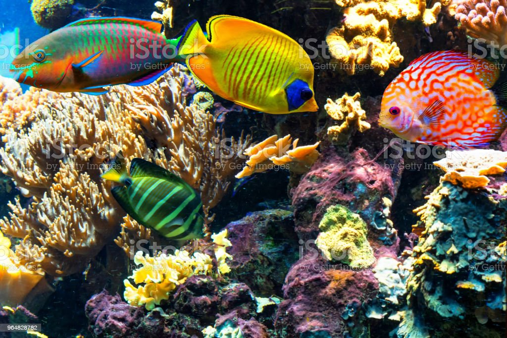 Colorful beautiful fish and underwater landscapes in the sea. royalty-free stock photo
