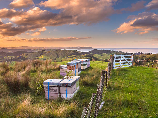Colorful Bee Hives Top of Hill Bay Islands, New Zealand stock photo