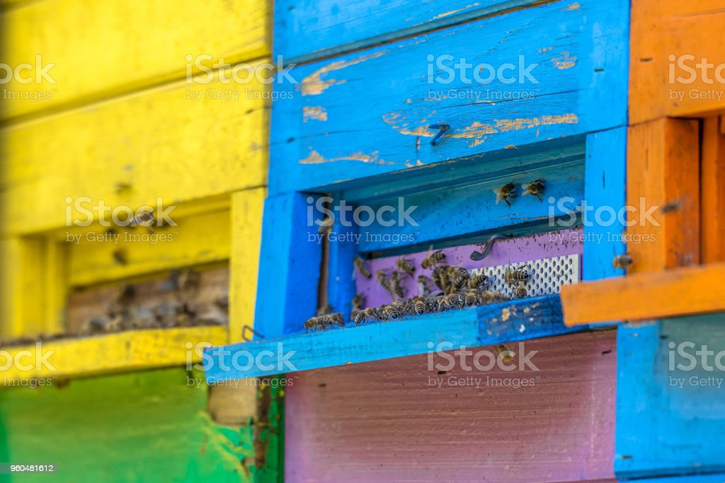 Colorful beehives close up stock photo