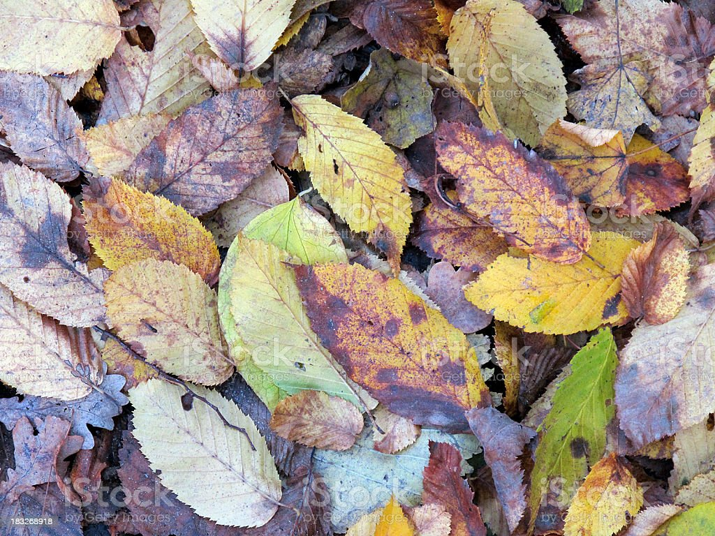 colorful bench leaf in autumn on the ground royalty-free stock photo
