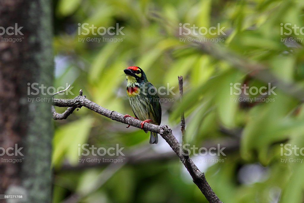 Colorful bird on tree branch in the garden royalty-free stock photo