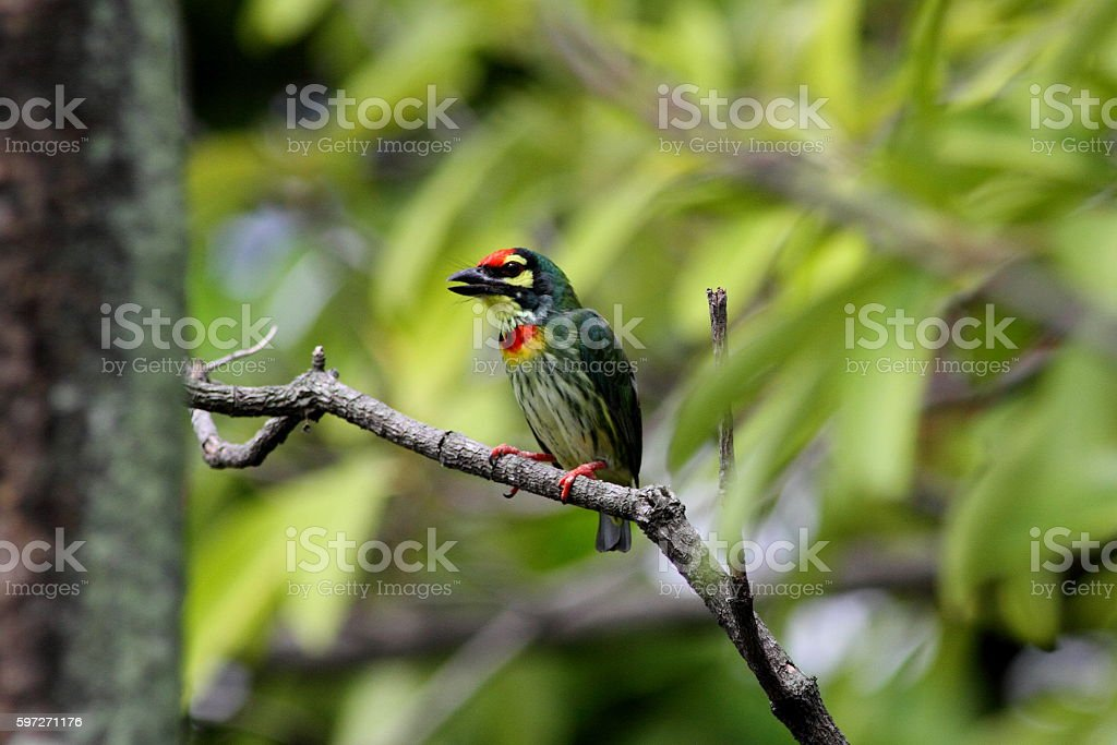 Colorful bird on tree branch royalty-free stock photo
