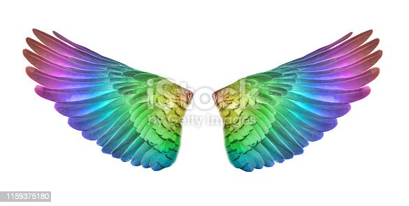 colorful bird wings set isolated on White Backgorund.
