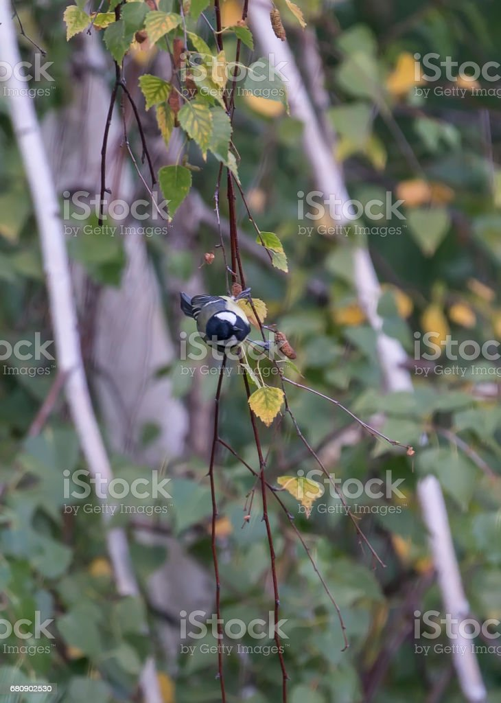 Colorful birds between the leaves of a tree on a sunny day royalty-free stock photo