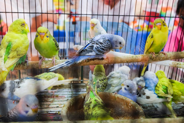 bunte vögel im käfig - urbanara stock-fotos und bilder