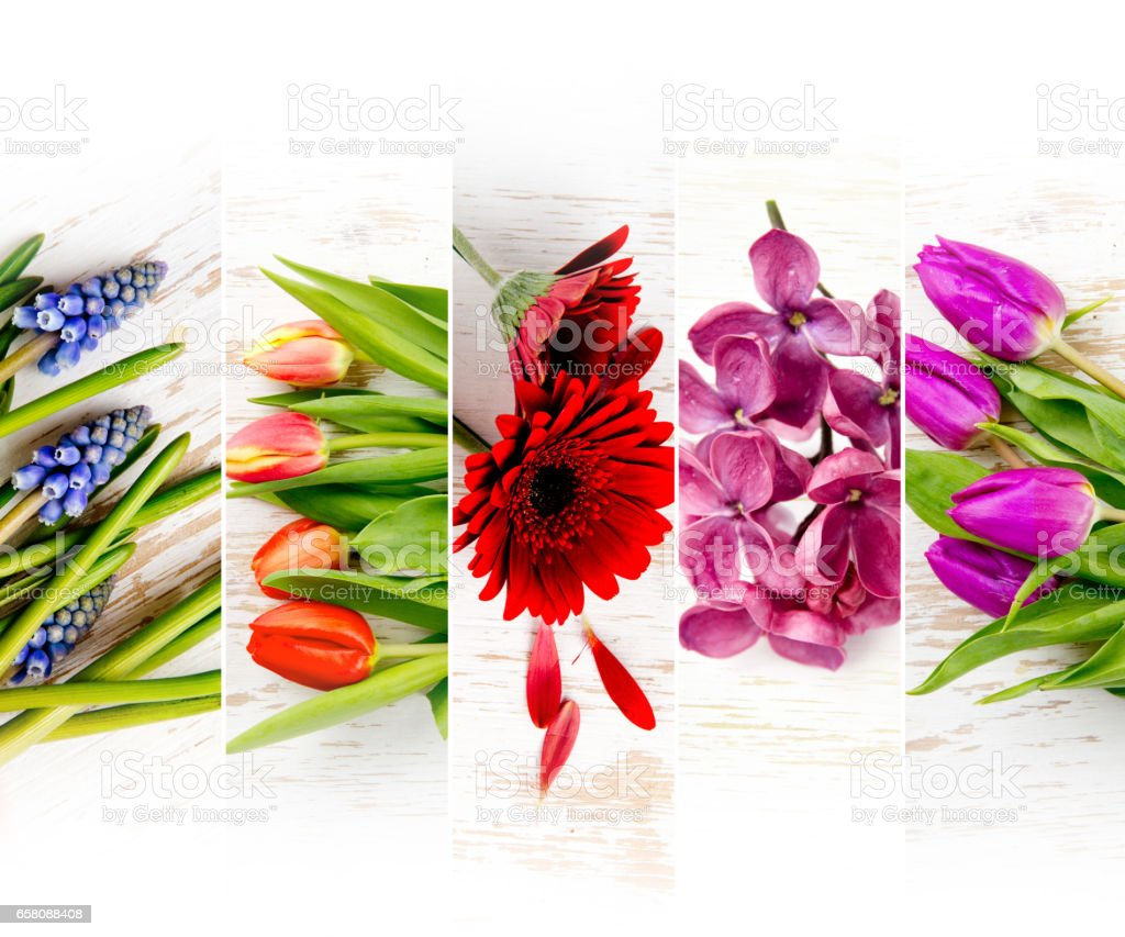 Colorful Bloom Mix royalty-free stock photo
