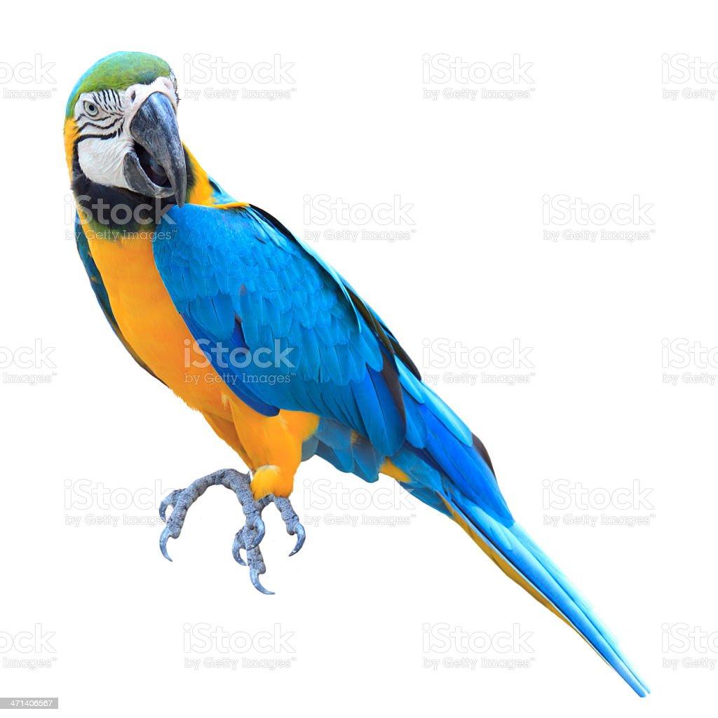Colorido papagaio Arara-Azul - foto de acervo