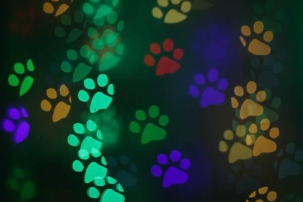 Colorful bokeh in the shape of animal tracks picture id1127058030?b=1&k=6&m=1127058030&s=612x612&w=0&h=sesn0z9er xwolw6oppek0fb6slkmwpm6v2kxbkk8vm=