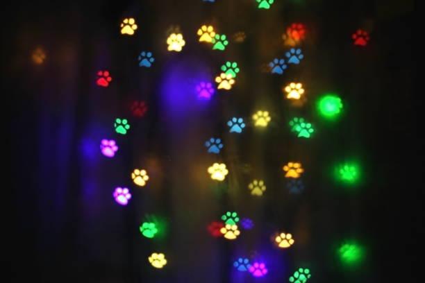 Colorful bokeh in the shape of animal tracks picture id1127060101?b=1&k=6&m=1127060101&s=612x612&w=0&h=acadewdagpzfmw8tlrt vm2 n9g6vsyajddkmzofqx8=