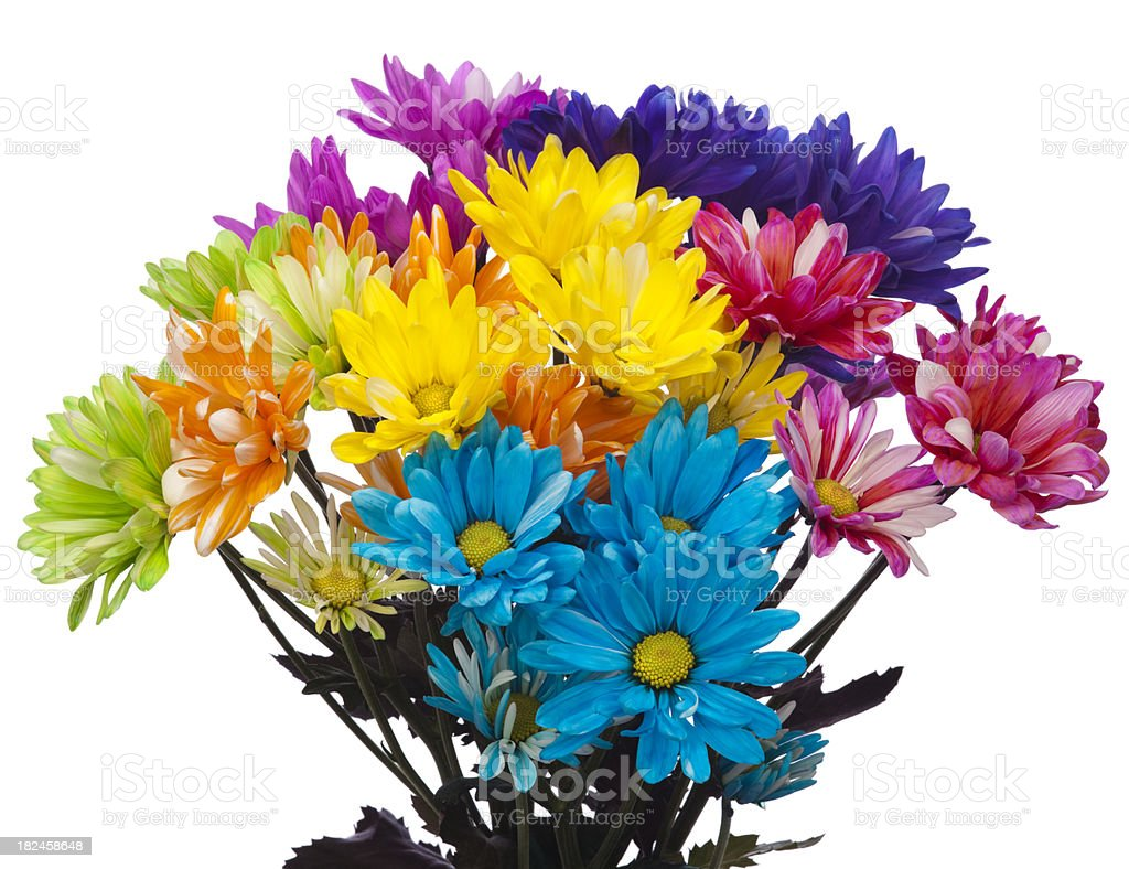 Colorful Bouquet of Fresh Cut Daisy Flowers on White Background royalty-free stock photo