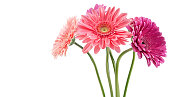 istock colorful bouquet of gerberas 518648390