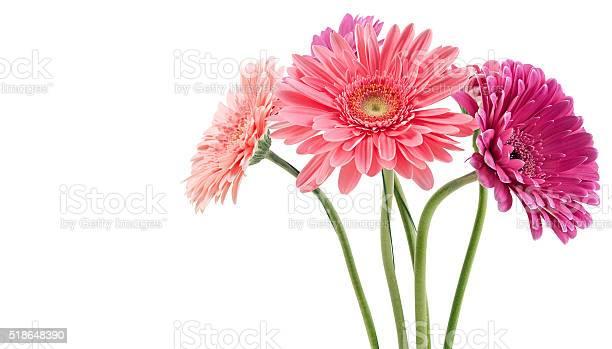 Colorful bouquet of gerberas picture id518648390?b=1&k=6&m=518648390&s=612x612&h=ucsstiu3s75teiuczzhgawj5p6fkbxkubbsry6loone=